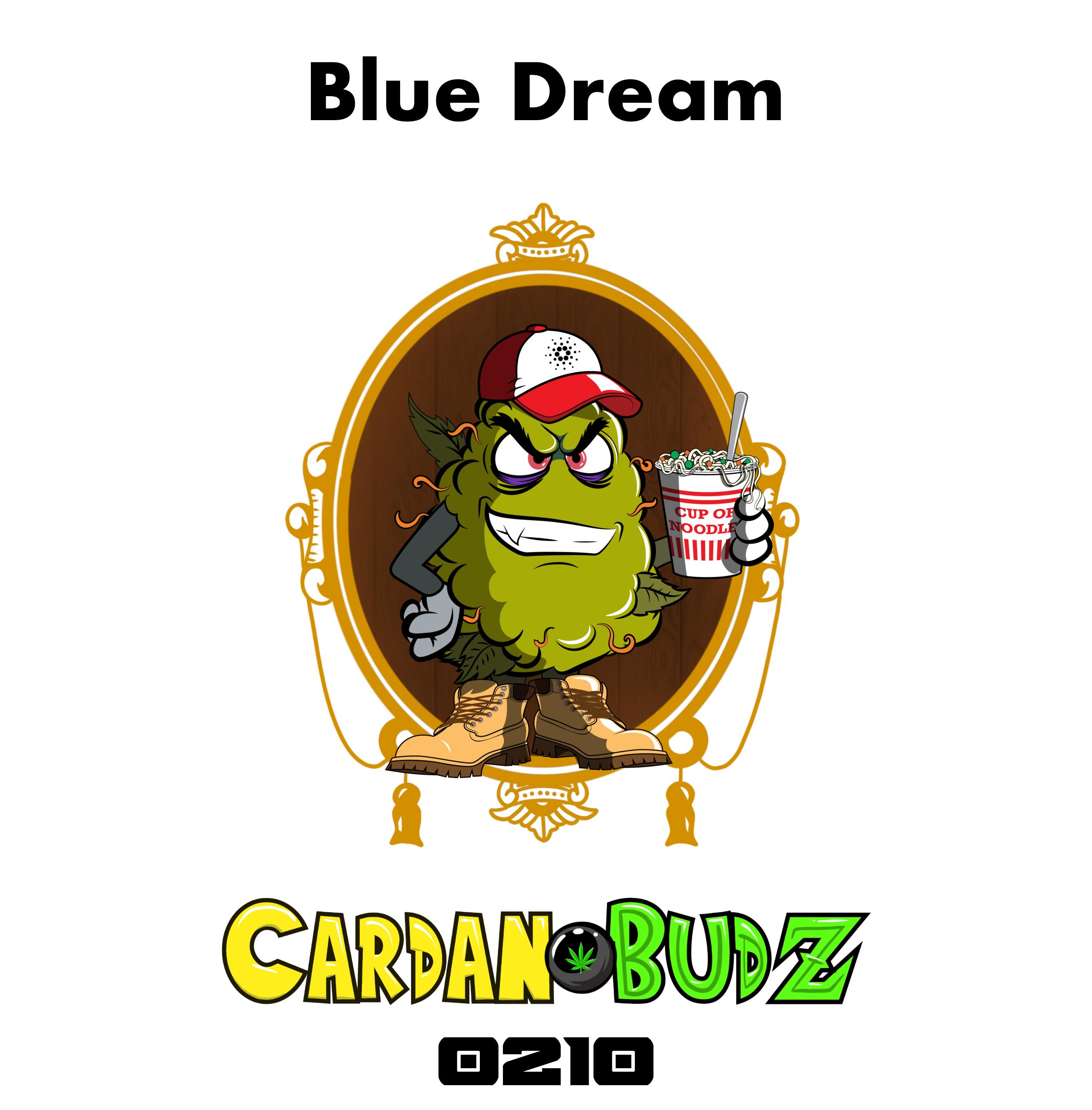 CardanoBud #210